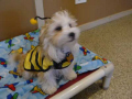 Bumble_Puppy_14c53_Small.jpg
