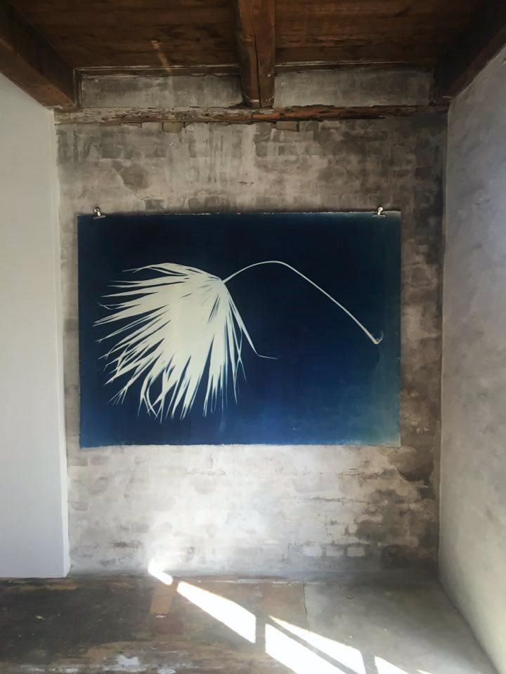 Dead People´s Dead Flower. Palm Tree print collected in Mexico.