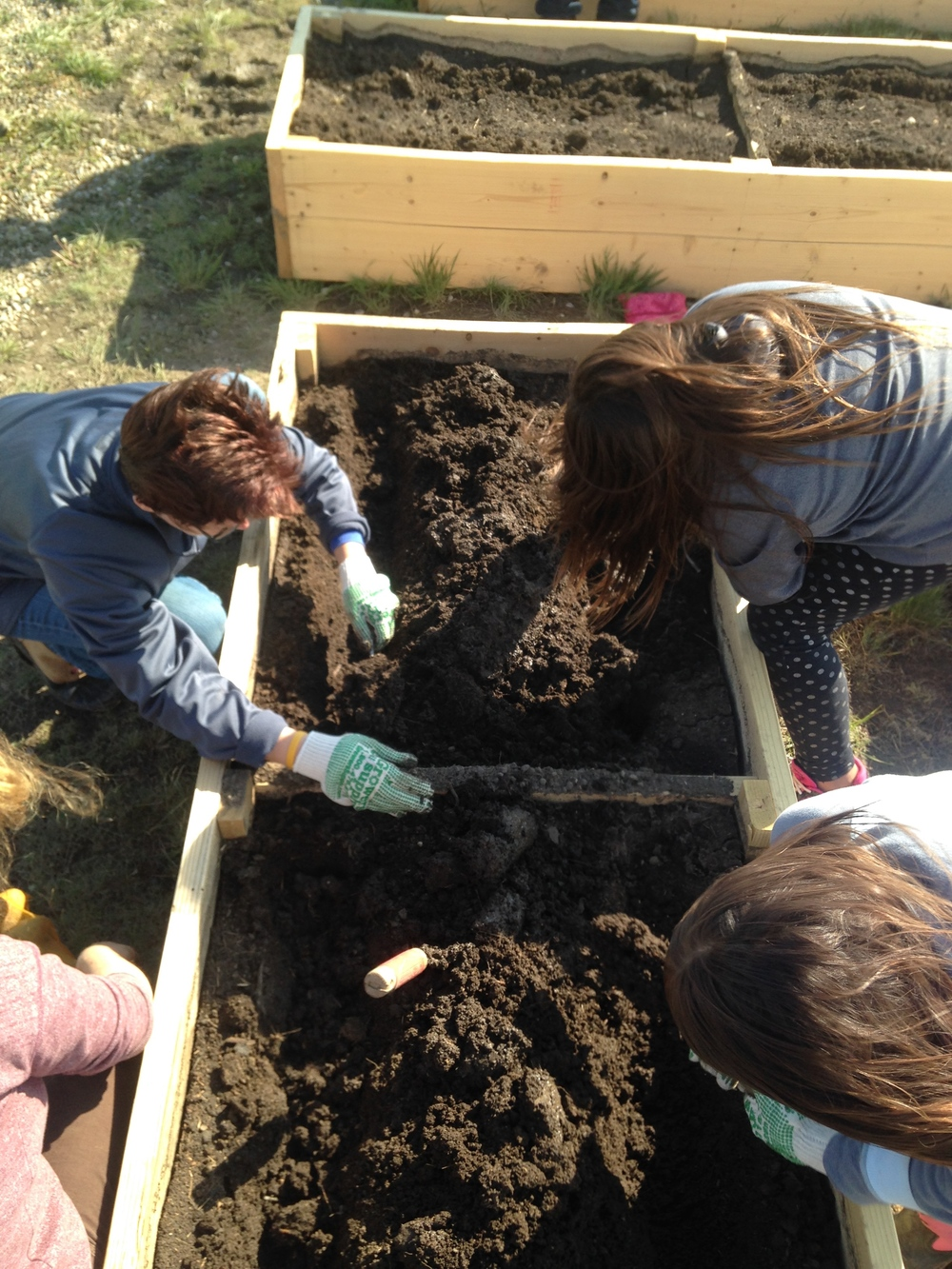 Garden fun:  The kids plant potatoes during garden class in the new raised beds!