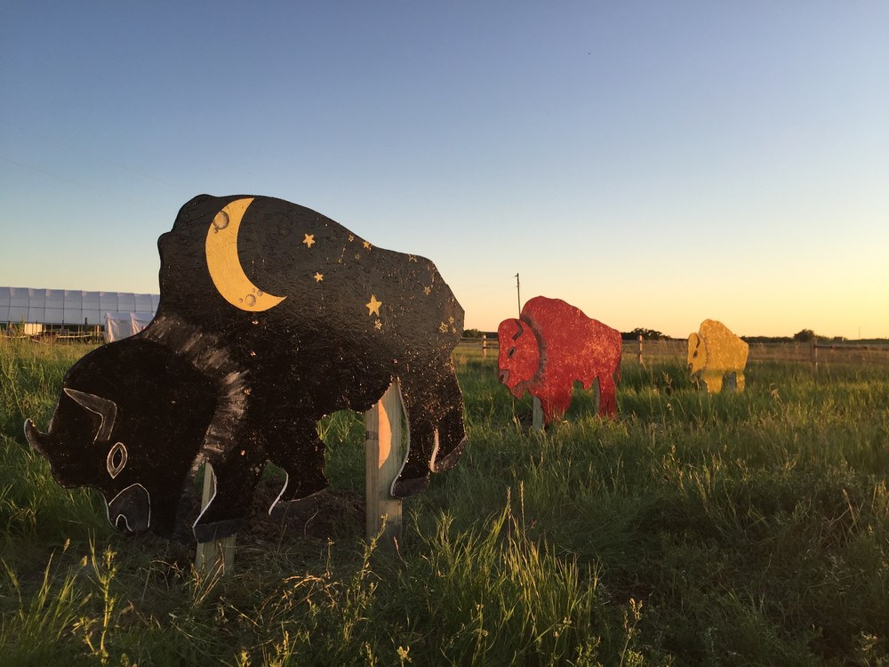 A new bison art installation dots the landscape!