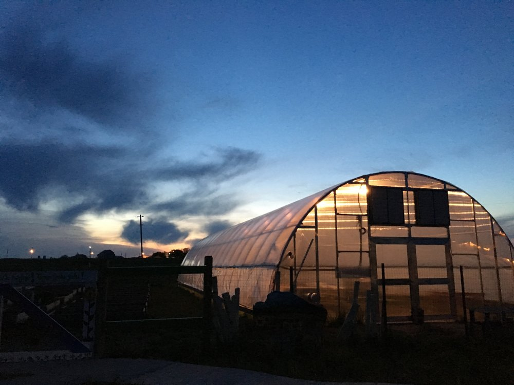 The greenhouse aglow as the sun sets in La Plant!