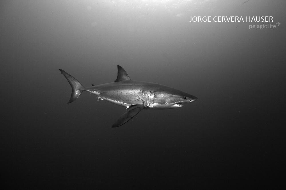 426 - Jorge Cervera - Guadalupe SW - Mexico - September 2012.jpg