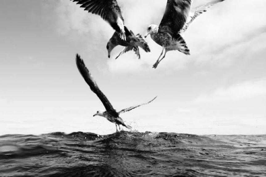 GAVIOTAS Fotógrafo: Jorge Cervera Hauser Fotografía: 60x40cm Montaje: 100x80cm Algodón