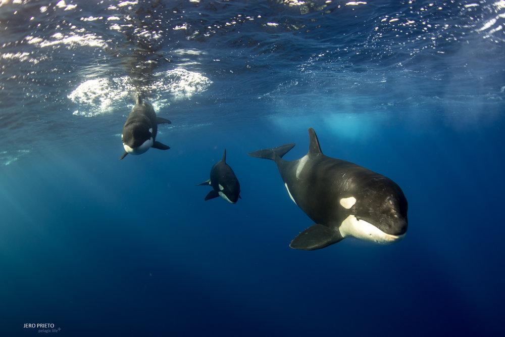 JPB 2016 Noviembre, Magbay Marlin Orca-20 (16).JPG