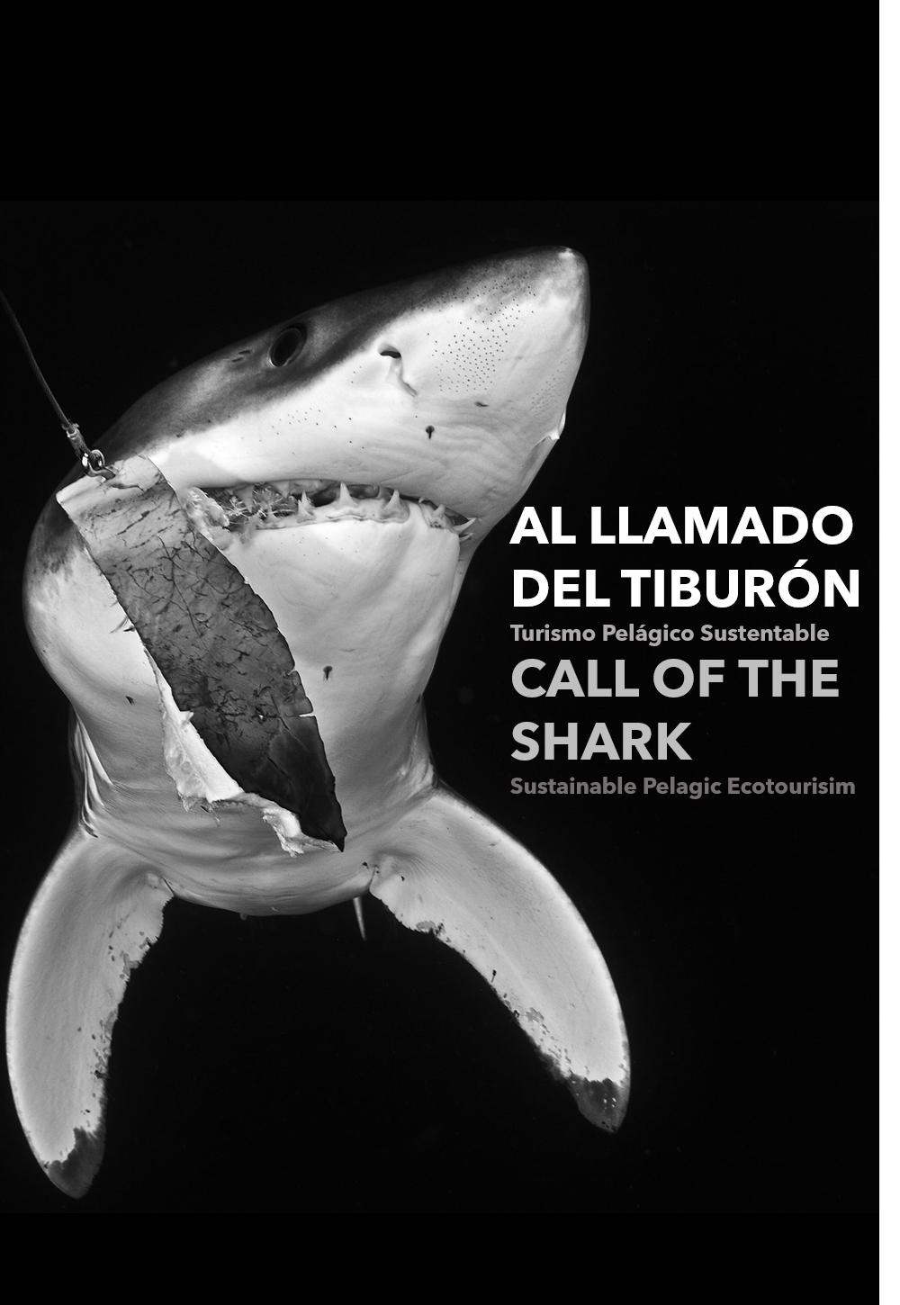 Call of the Shark Al llamado del tiburón Pelagic Life.png