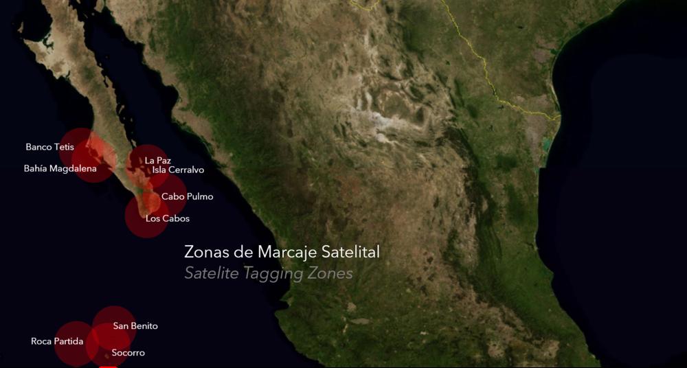 Migraciones Pelagicas Pelagic Life marcas satelitales tiburon ballena manta gigante.png