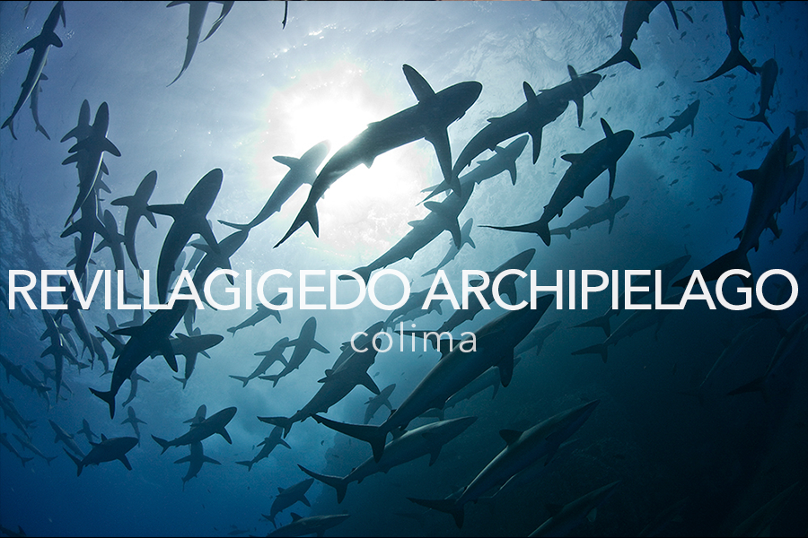 PELAGIC LIFE ARCHIPIELAGO REVILLAGIGEDO.png