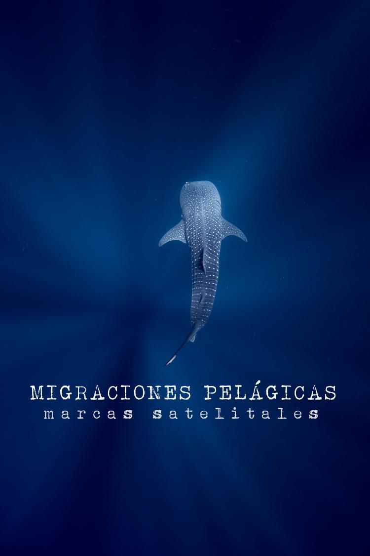 Migraciones Pelagicas Marcas Satelitales Pelagic Life Proteccion y Conservación Pelágica AC.png