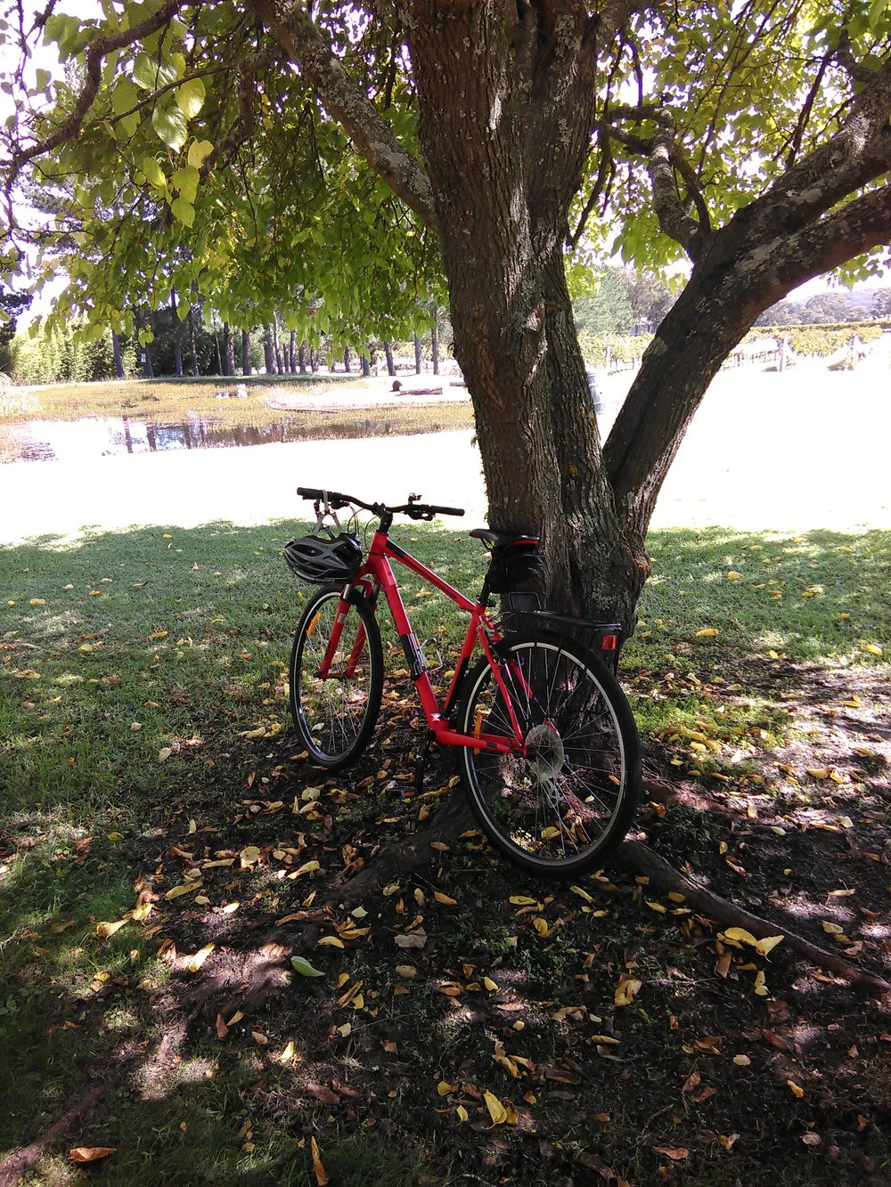 autumn-bike.jpg