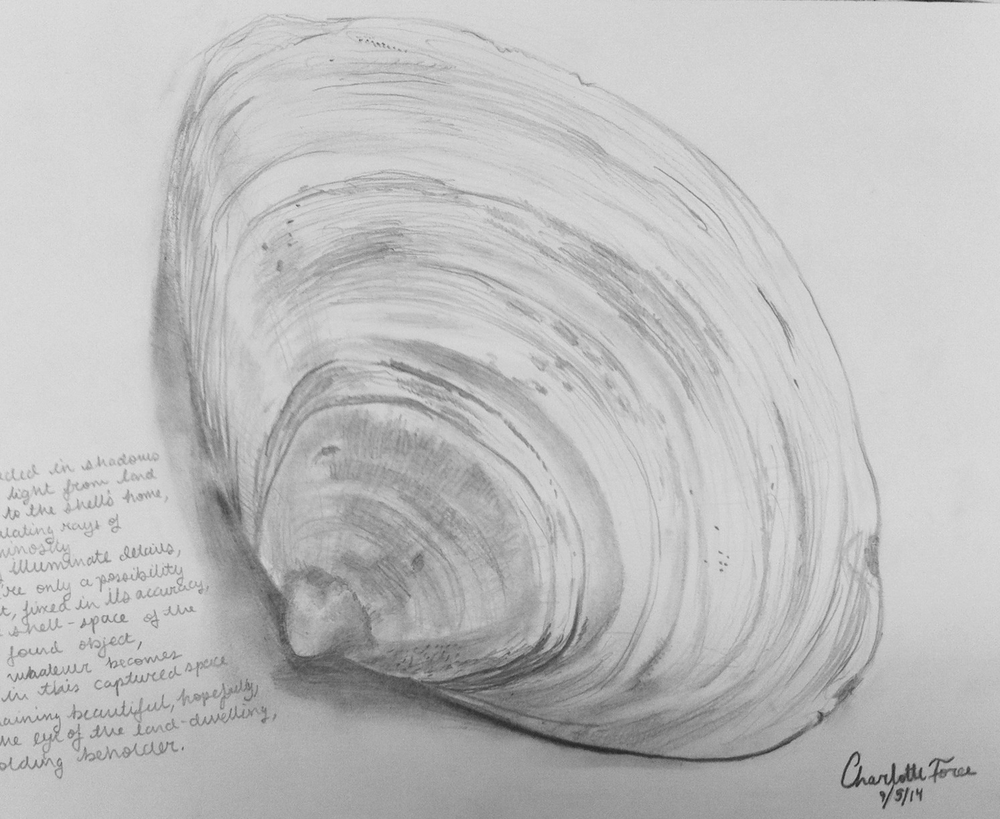 Shell study by Charlotte Force