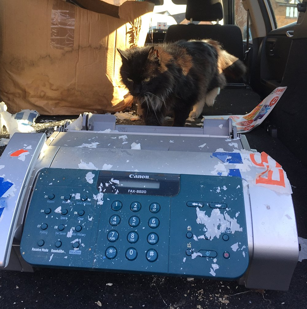 Harry the Cat inspects an old fax machine, being thrown out
