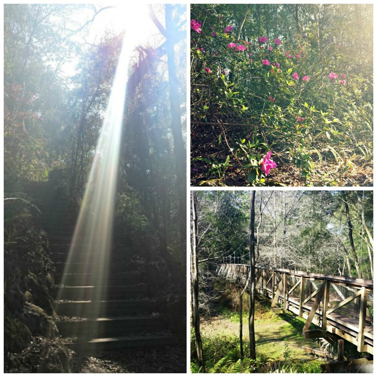 Hiking at Ravine Gardens State Park, Palatka, Fla. Images courtesy of Laura Knight.