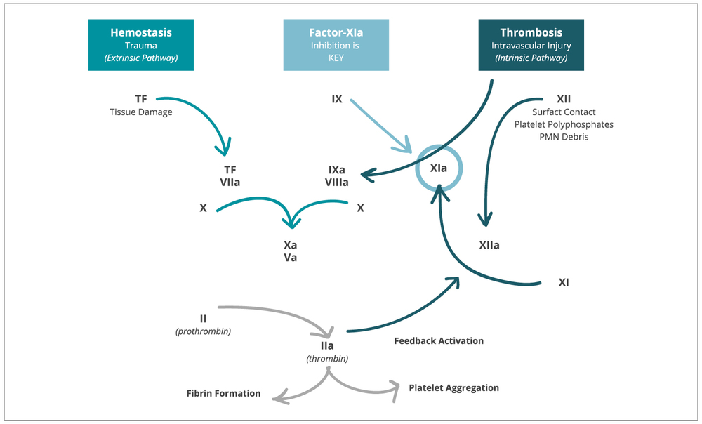 cephalic vein thrombosis treatment guidelines