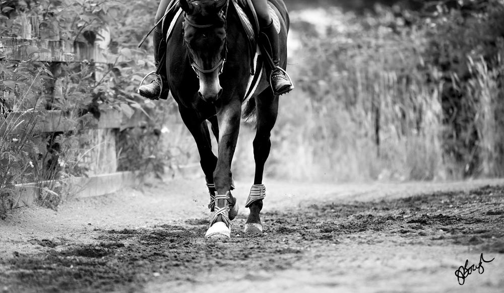 HorseTest-199.jpg