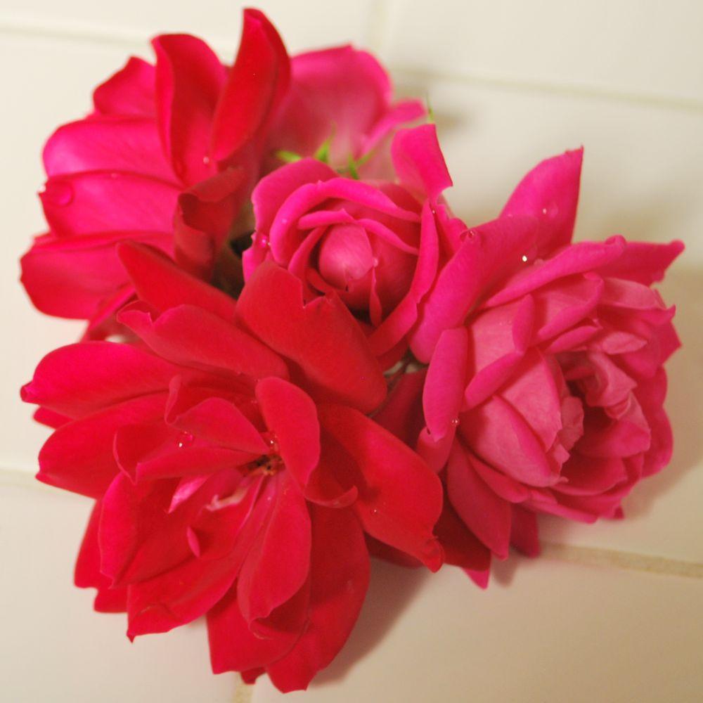 flowerarr1