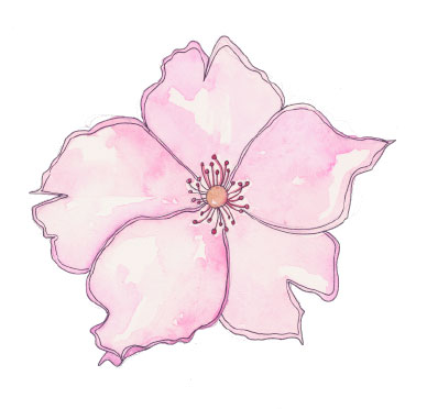 pinkrose2