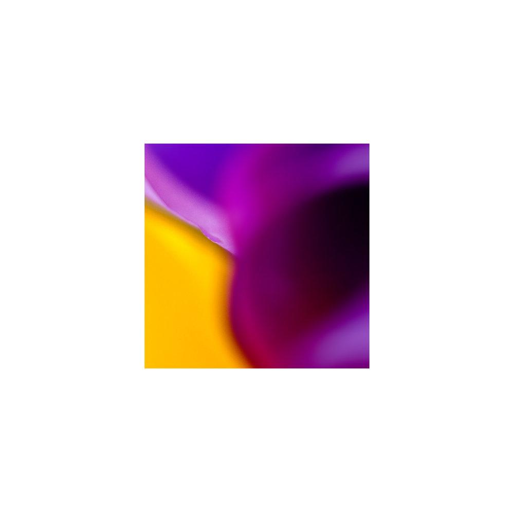 abstracted flower singles2.jpg