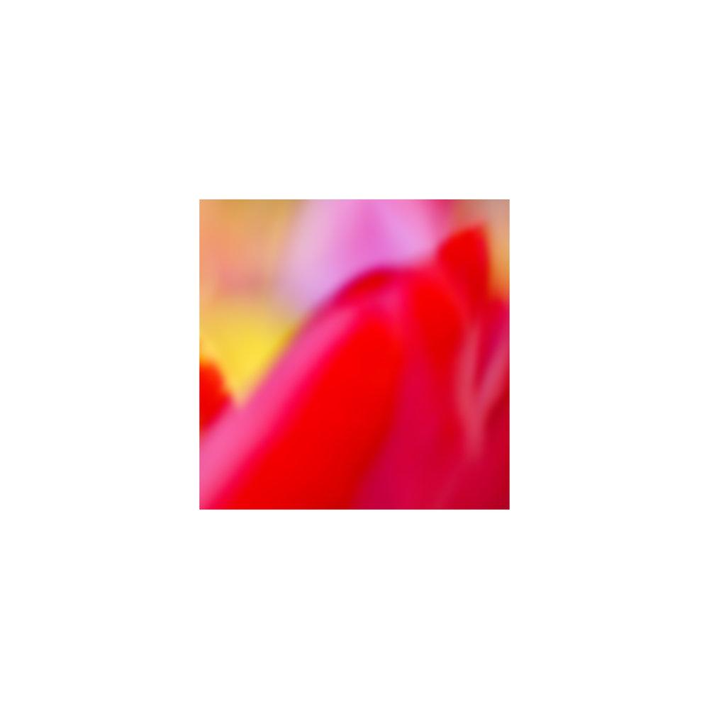 abstracted flower singles7.jpg
