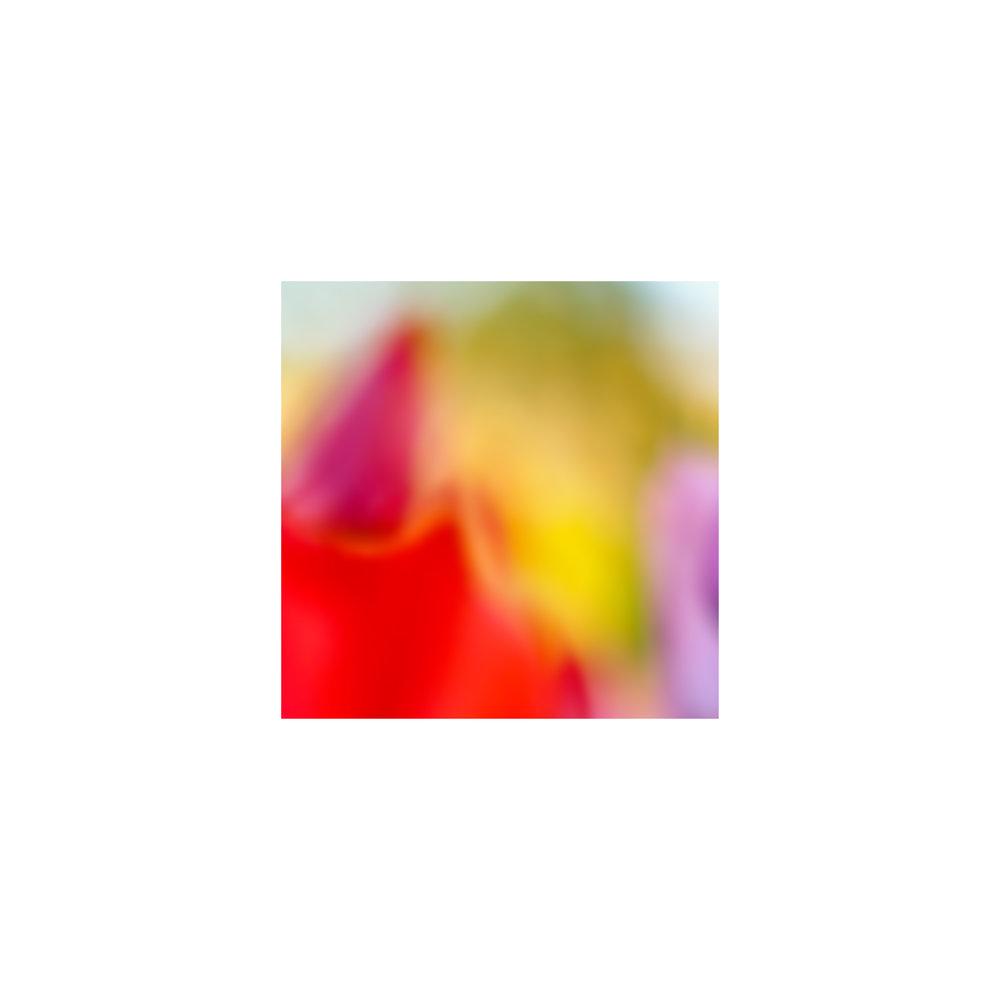 abstracted flower singles8.jpg