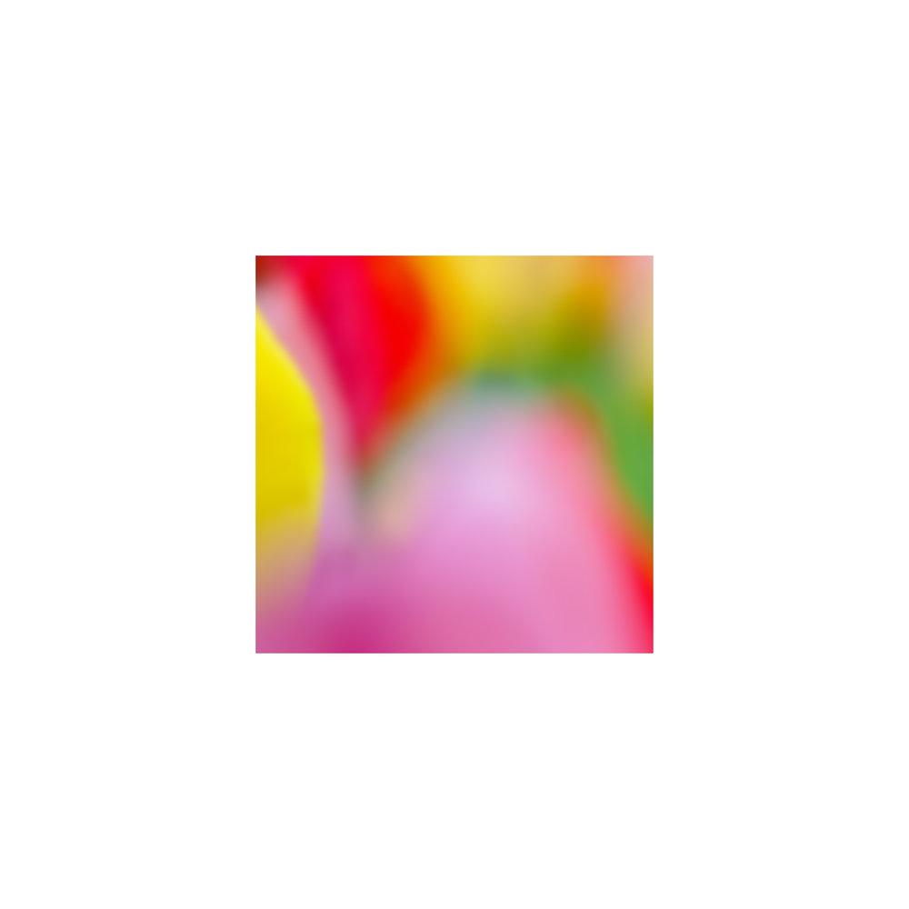 abstracted flower singles9.jpg