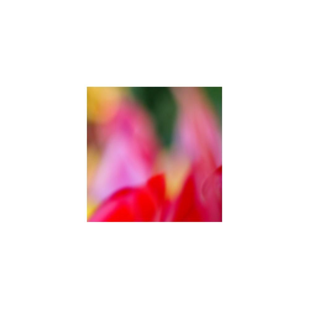 abstracted flower singles11.jpg