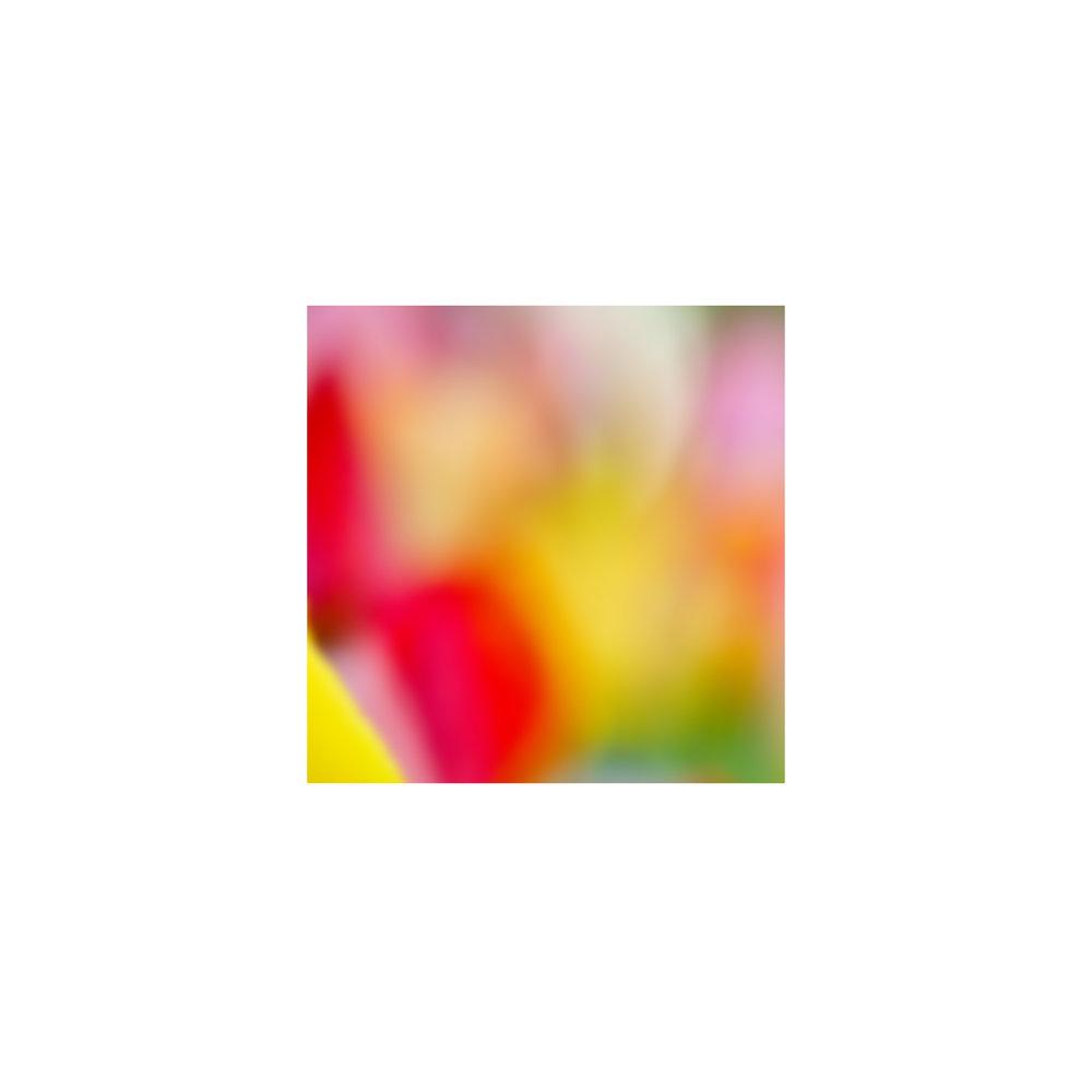 abstracted flower singles13.jpg