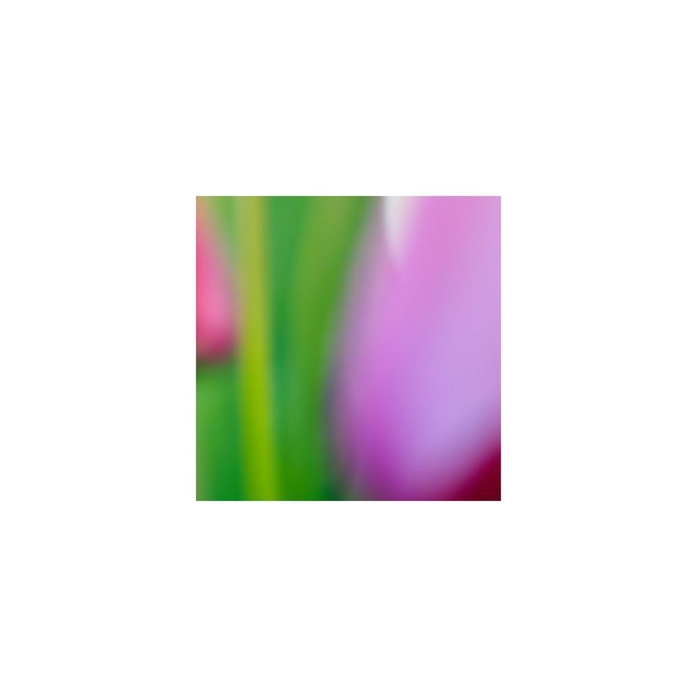abstracted flower singles10.jpg