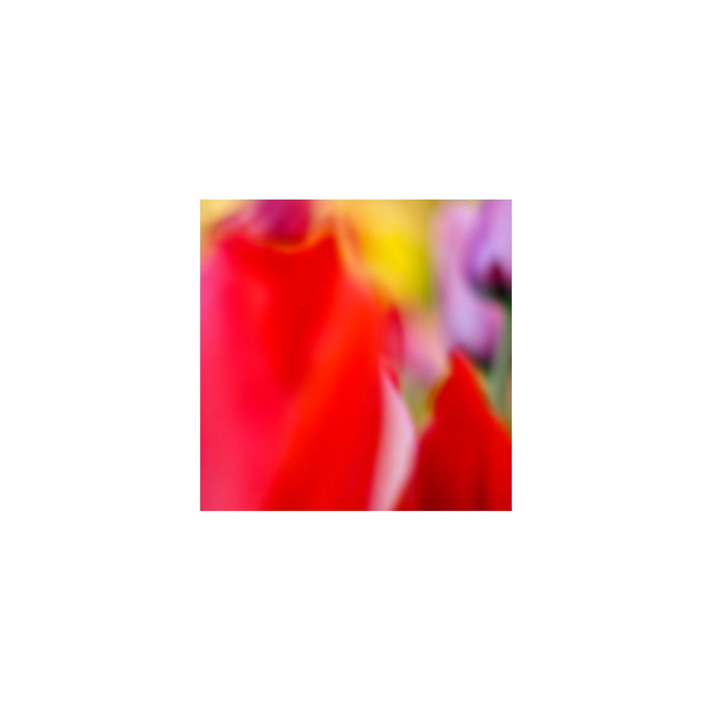 abstracted flower singles14.jpg