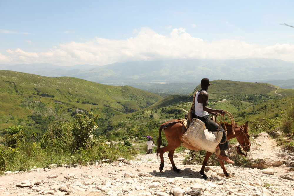 A Haitian man guides his pack mule down a mountain toward Desarmes in the Artibonite Valley of Haiti. Prior to the earthquake, MCC had a thriving reforestation program in Desarmes after three decades building relationships with the community.