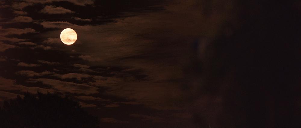 dawn_1.256.1.jpg