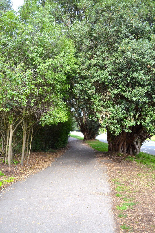 Golden Gate Park10.jpg