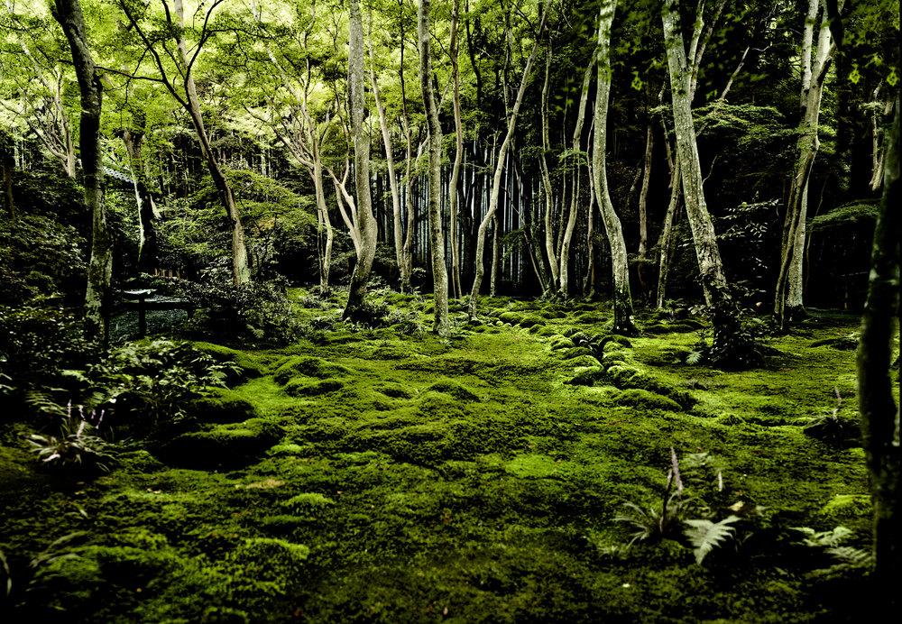 moss-forestBiger-(1).jpg