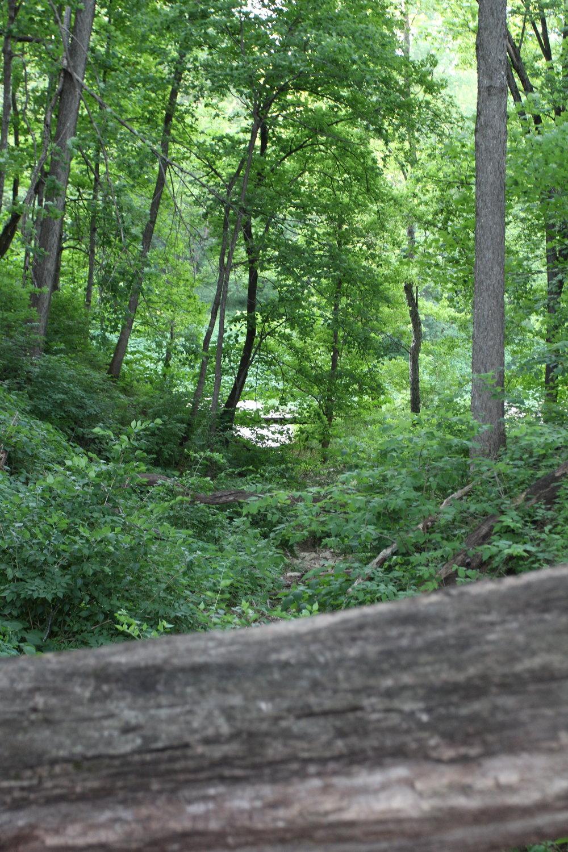 Forest behind Breckenridge Park