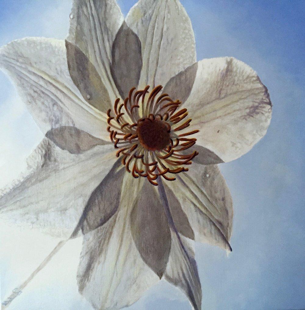 transcending white     20 x 20 oil on canvas