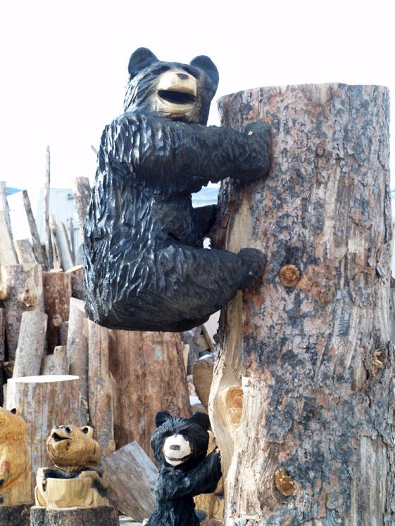 climbinb bear.jpg