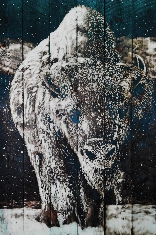 Trudge - buffalo in snow