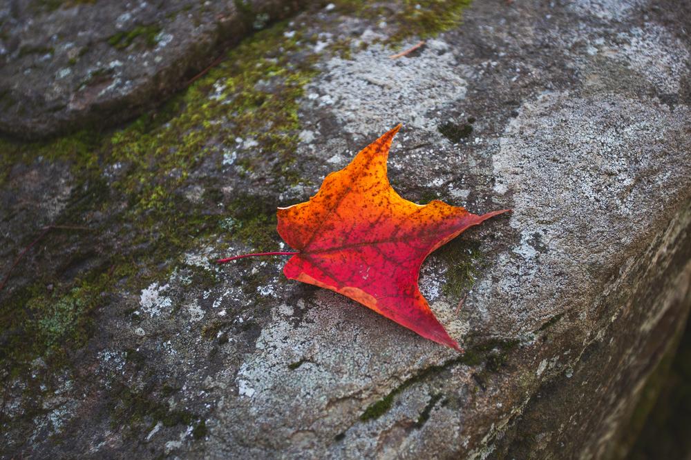 algonquin-fall2014-19-2.jpg