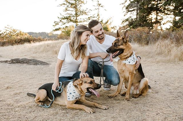 Soooo thrilled to get to hang out with this gang again and document another super special moment in their lives! Swipe to see!!! #victoria #victoriabc #vancouverisland #germanshepherd #germanshepherdsofig #dogparty #niagara #engaged #engagementphotos #announcement #pregnant #portrait #portraitphotography #makeportraits #lookslikefilm #dogsofinstaworld #westcoast #dogsonadventures #momentsovermountains #loveauthentic #sunset_pics #tongueouttuesday #pregnancyannouncement #shessaidyes #niagaraphotographer #torontophotographer #vancouverphotographer #lblcollective #stcatharines #vancouverislandphotographer
