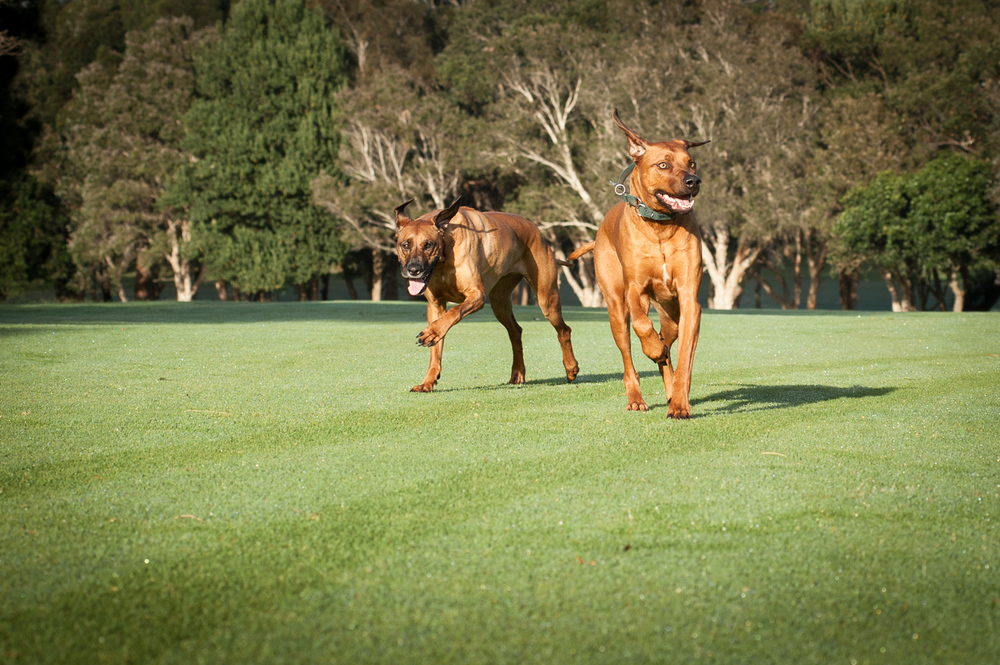 northern beaches pet photographer