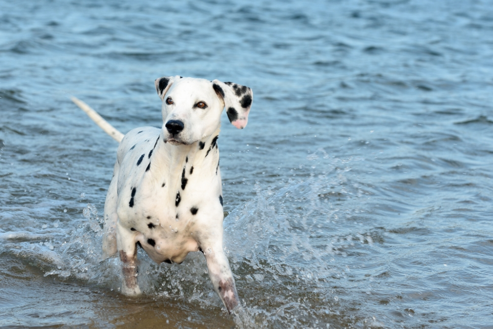 pet photographer northern beaches