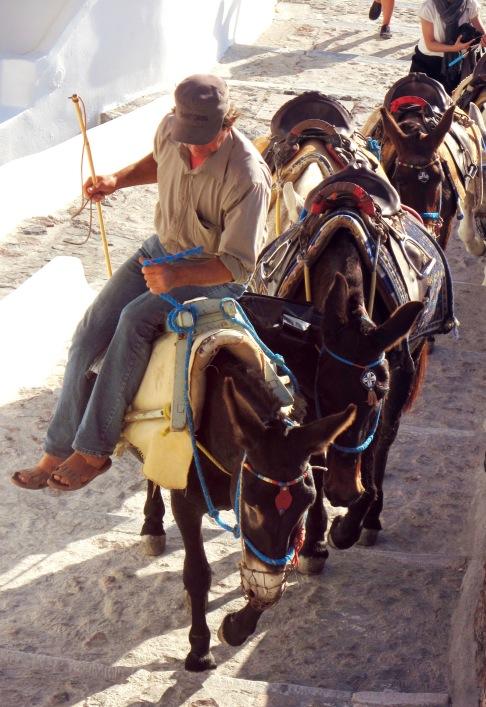 Santorini_donkeys_close up.jpg