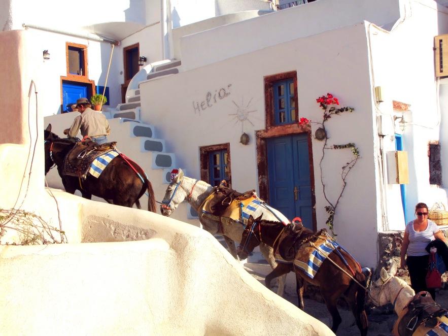 Sanotrini_donkeys climbing stairs_2.jpg