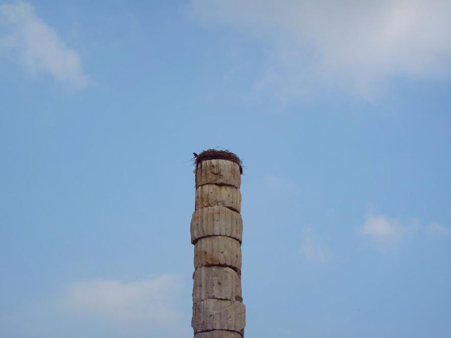 Ephesus_birds nest_7 wonders site.JPG