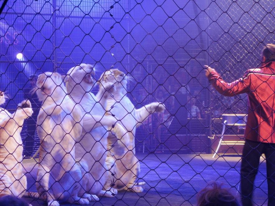 St Tropez_Circus_Tigers.JPG
