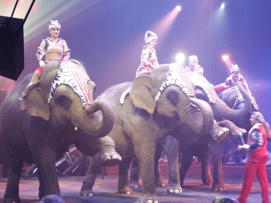 St Tropez_Elephants_1.JPG
