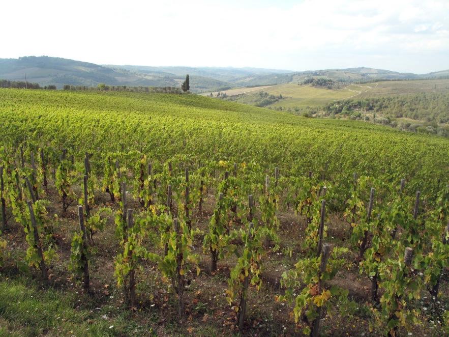 Tuscany_vineyard near panzano.JPG
