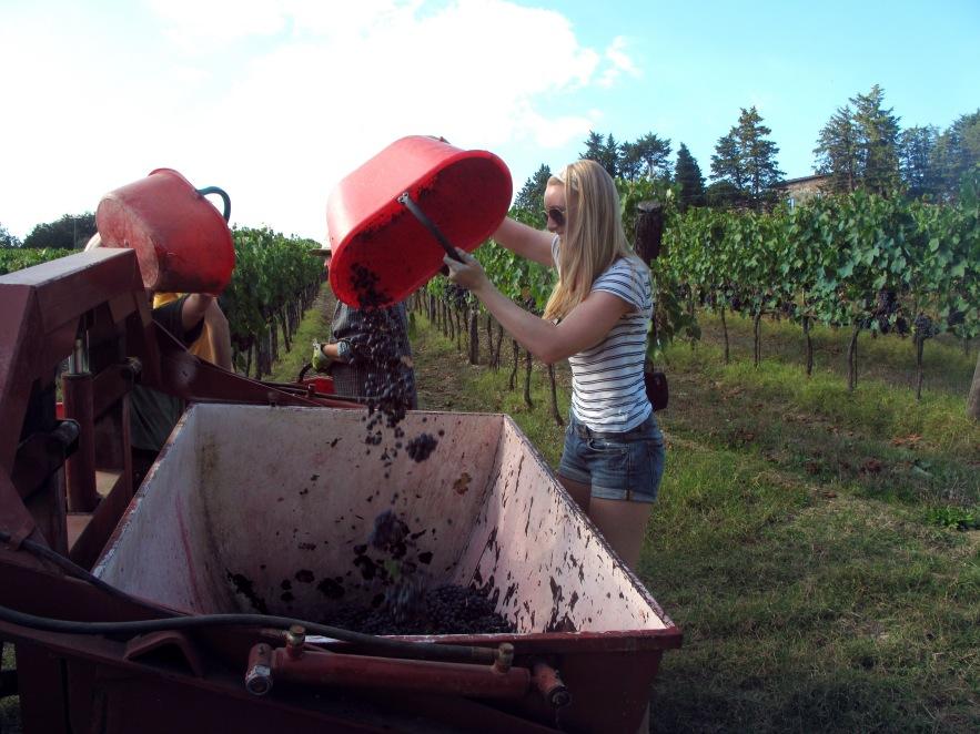 uscany_grape picking_imogen emptying bucket.JPG