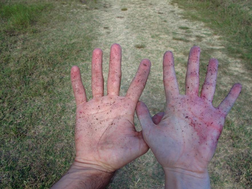 Tuscany_grape picking_dirty hands_2.JPG