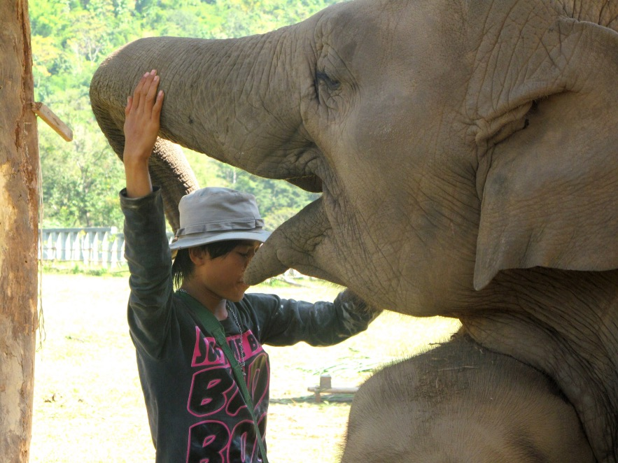 elephant with his carer