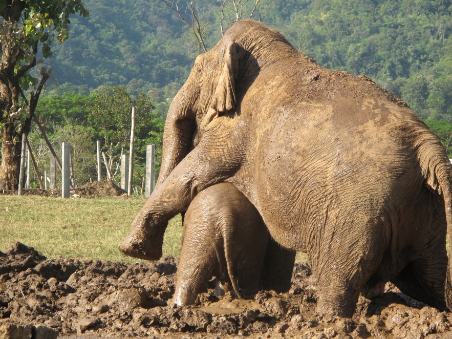 """""""alright, that's enough mud for you, time to go"""""""